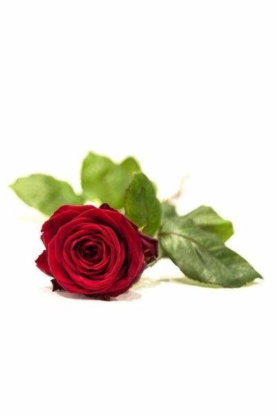 funerale-lanfranco-moriconi-terni